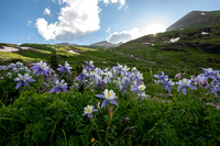 Columbines and Sunburst